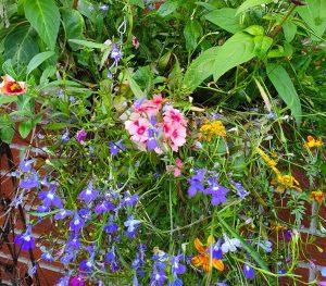 flowers in hanging basket