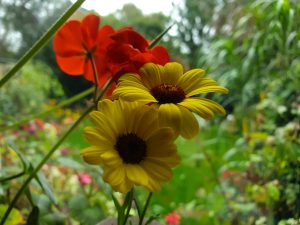 flowering plug plants