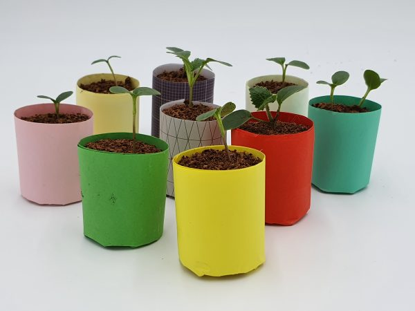 Paper Pots made using the e-pots Paper Pot maker