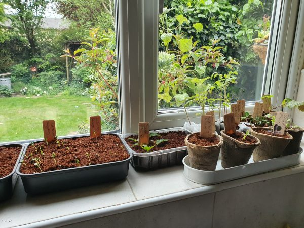 seedlings on windowsill using multiple e-pots products