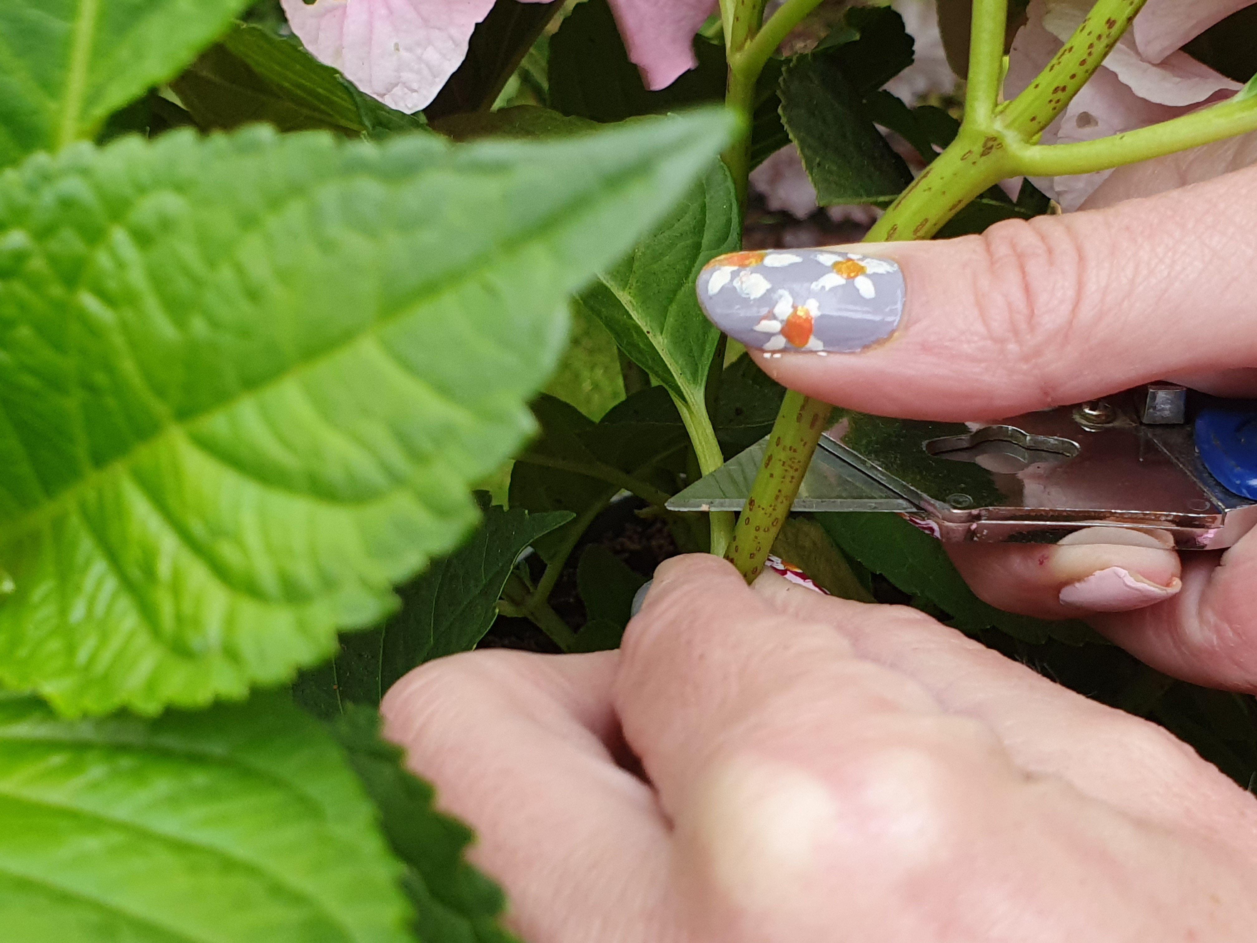 Use a knife to cut above a leaf node