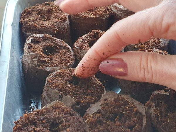 e-pots seed sowing in coir pellets