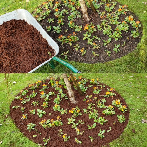 Coco coir top dressing flower bed