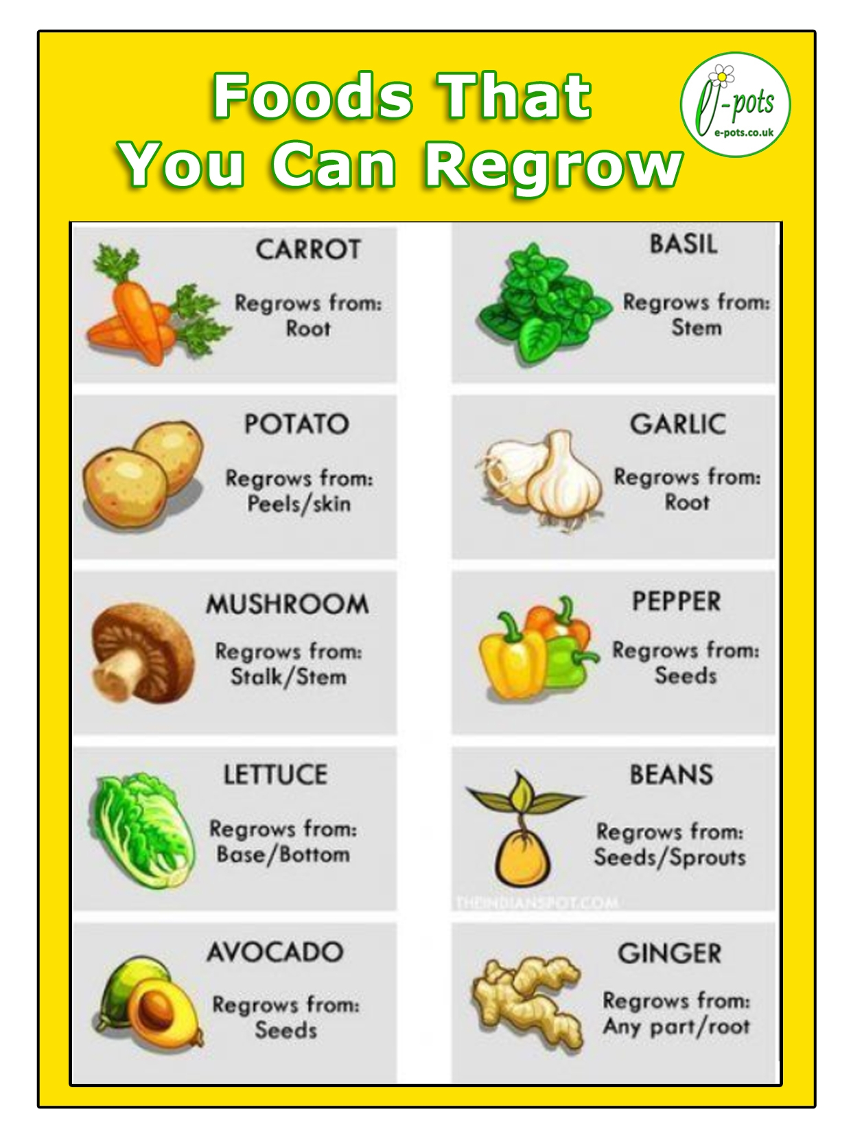 Foods you can regrow