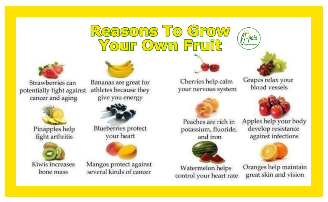 Fruit Reasons